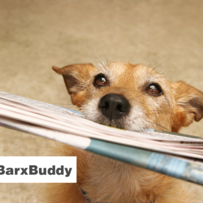 BarxBuddy: Should You Invest in This Hot New Pet Gadget?