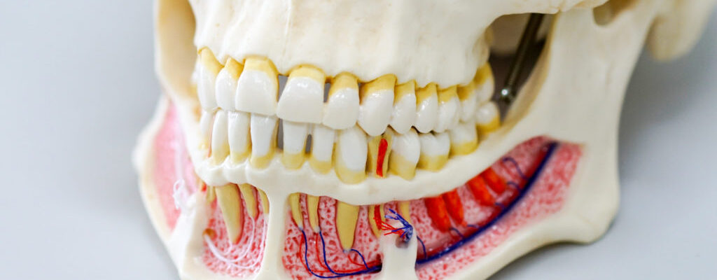 Dental Implant Placement: Everything a Patient Must Know
